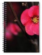 Pink Blossom In The Evening Spiral Notebook