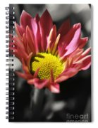 Pink Chrysanthemum Spiral Notebook