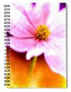 Pink Cosmos On Orange Spiral Notebook