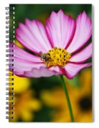 Pink Cosmos Picotee And Bee Spiral Notebook