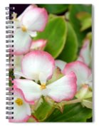 Pink Dipped Spiral Notebook