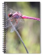 Pink Dragonfly In The Marsh Spiral Notebook
