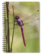 Pink Dragonfly With Sparkly Wings Spiral Notebook