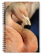 Pink Flamingo 8 Spiral Notebook
