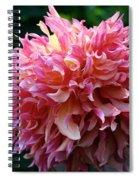 Pink Frills Spiral Notebook