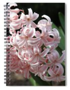 Pink Hyacinth Spiral Notebook
