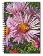 Pink New York Aster- Symphyotrichum Novi-belgii Spiral Notebook