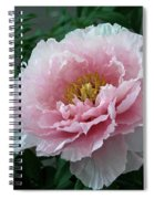Pink Peony Flowers Series 2 Spiral Notebook