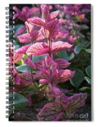 Pink Periwinkle Spiral Notebook