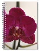 Pink Phalaenopsis Orchid  Spiral Notebook