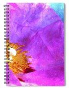 Pink Rock Rose On Blue Spiral Notebook