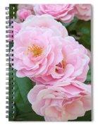 Pink Roses II Spiral Notebook