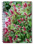 Pink Shrimp Plant Spiral Notebook