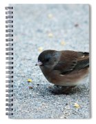 Pink-sided Junco Spiral Notebook