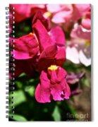 Pink Snap Spiral Notebook