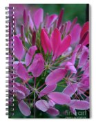Pink Spider Flower Spiral Notebook