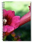 Pink Trumpets Spiral Notebook