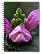 Pink Turtlehead Spiral Notebook
