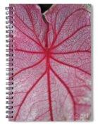 Pink Veins Spiral Notebook