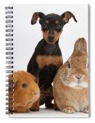 Pinscher Puppy With Rabbit And Guinea Spiral Notebook
