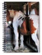 Pinto Looking Back Spiral Notebook