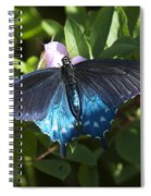 Pipevine Swallowtail Din003 Spiral Notebook