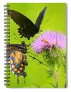 Pipevine Swallowtails In Tandem Spiral Notebook