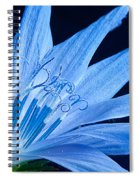 Pistil's Of Chicory Spiral Notebook