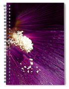 Pixie Dust Spiral Notebook