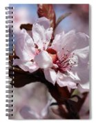 Plum Blossoms 10 Spiral Notebook