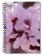 Plum Blossoms 4 Spiral Notebook