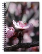 Plum Blossoms 9 Spiral Notebook