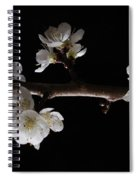 Plum Tree Spring Blossum Spiral Notebook