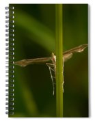 Plume Moth Spiral Notebook