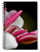 Plumeria In The Wind Spiral Notebook