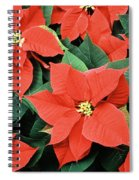 Poinsettia Varieties Spiral Notebook