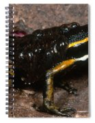 Poison Arrow Frog With Tadpoles Spiral Notebook