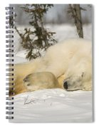 Polar Bear With Cub In Snow Spiral Notebook