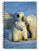 Polar Bear With Cubs Spiral Notebook