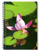 Polish Beauty Spiral Notebook