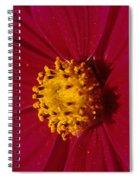 Pollen Dust Spiral Notebook