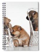 Pomeranian 3 Spiral Notebook