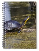 Pond Turtle Basking In The Sun Spiral Notebook