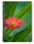 Poppies Vibrance Spiral Notebook
