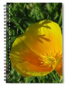 Poppy 01 Spiral Notebook