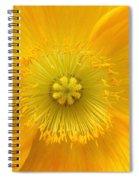 Poppy 2 Spiral Notebook