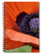 Poppy For Peace Spiral Notebook