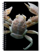 Porcelain Crab Spiral Notebook