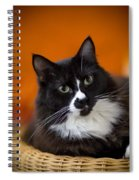 Portrait Of A Cat Spiral Notebook