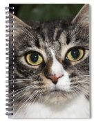 Portrait Of A Cat With Two Toned Eyes Spiral Notebook